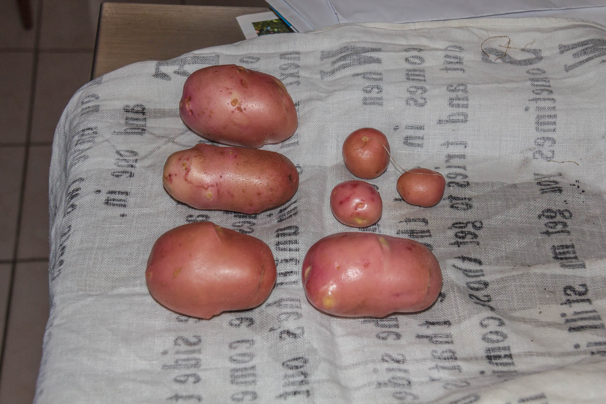 4 medium potatoes and 3 small potatoes spud