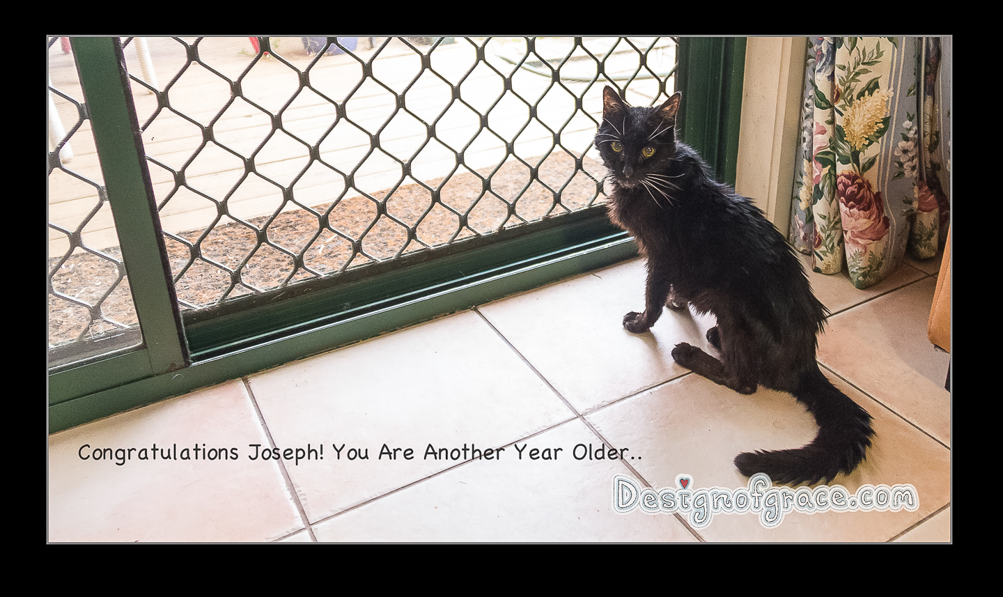 "Old black cat with white whiskers saying "" Congratulations Joseph! You Are Another Year Older"""