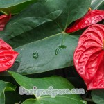 red heart shape flower among green foilage
