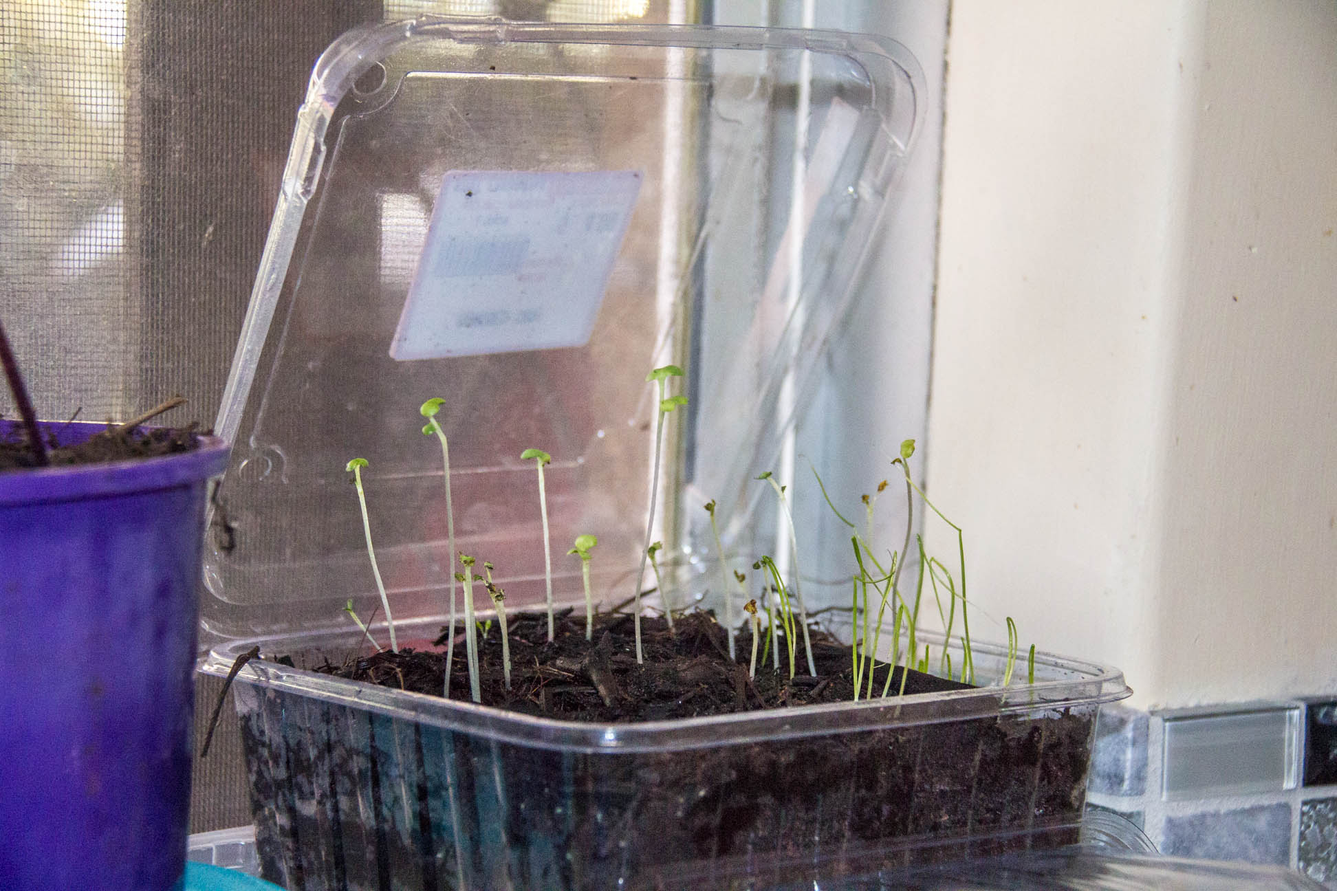 07/05/15 Day 14 seedlings are still growing tall and strong
