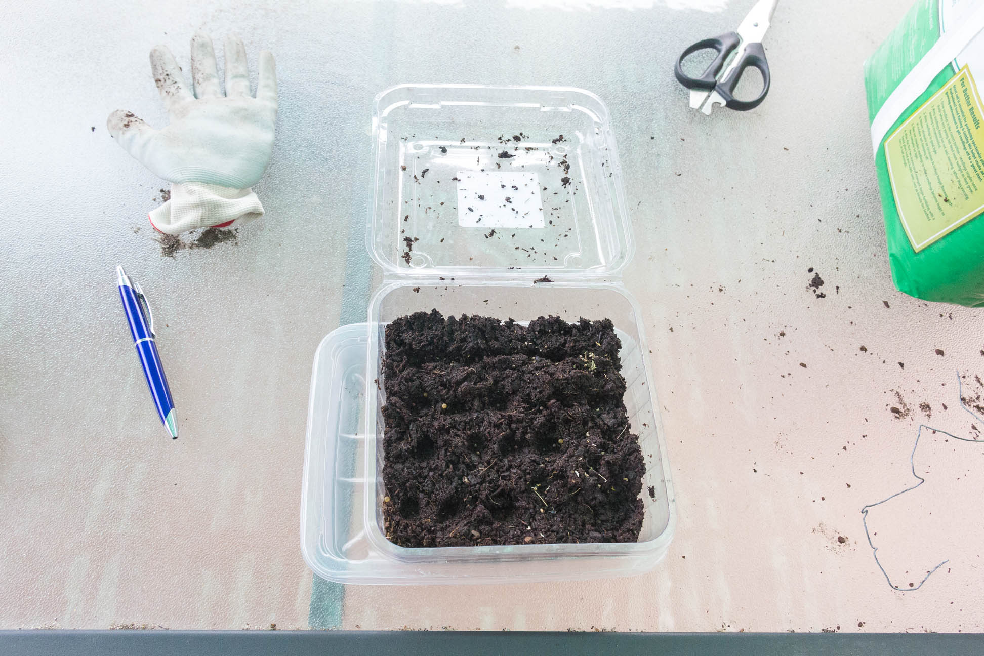 24/04/15 Day 1 Divided the seeds into different sections.