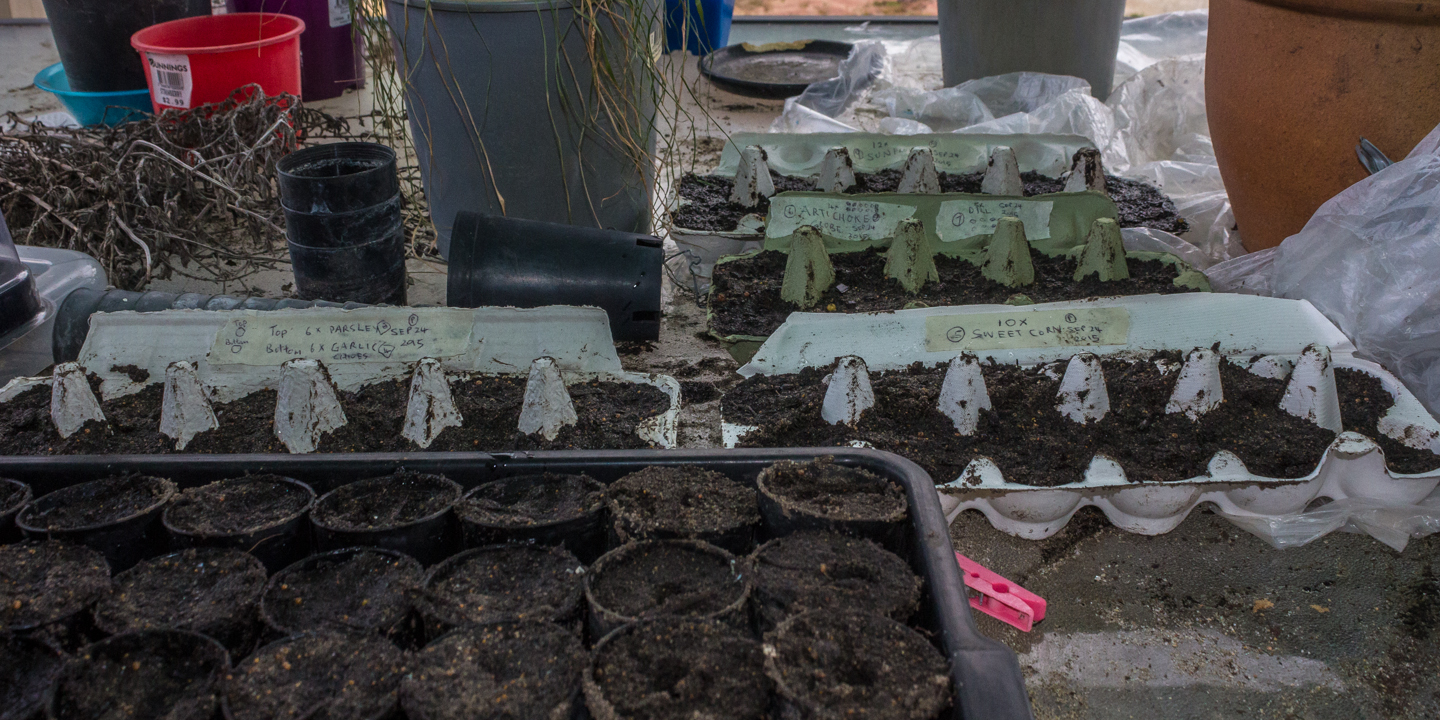 24/09/15 Seeds To be planted directly 1) Parsley 2) Garlic Chives 4) Sweet Corn 5) Artichoke Globes 6) Dill