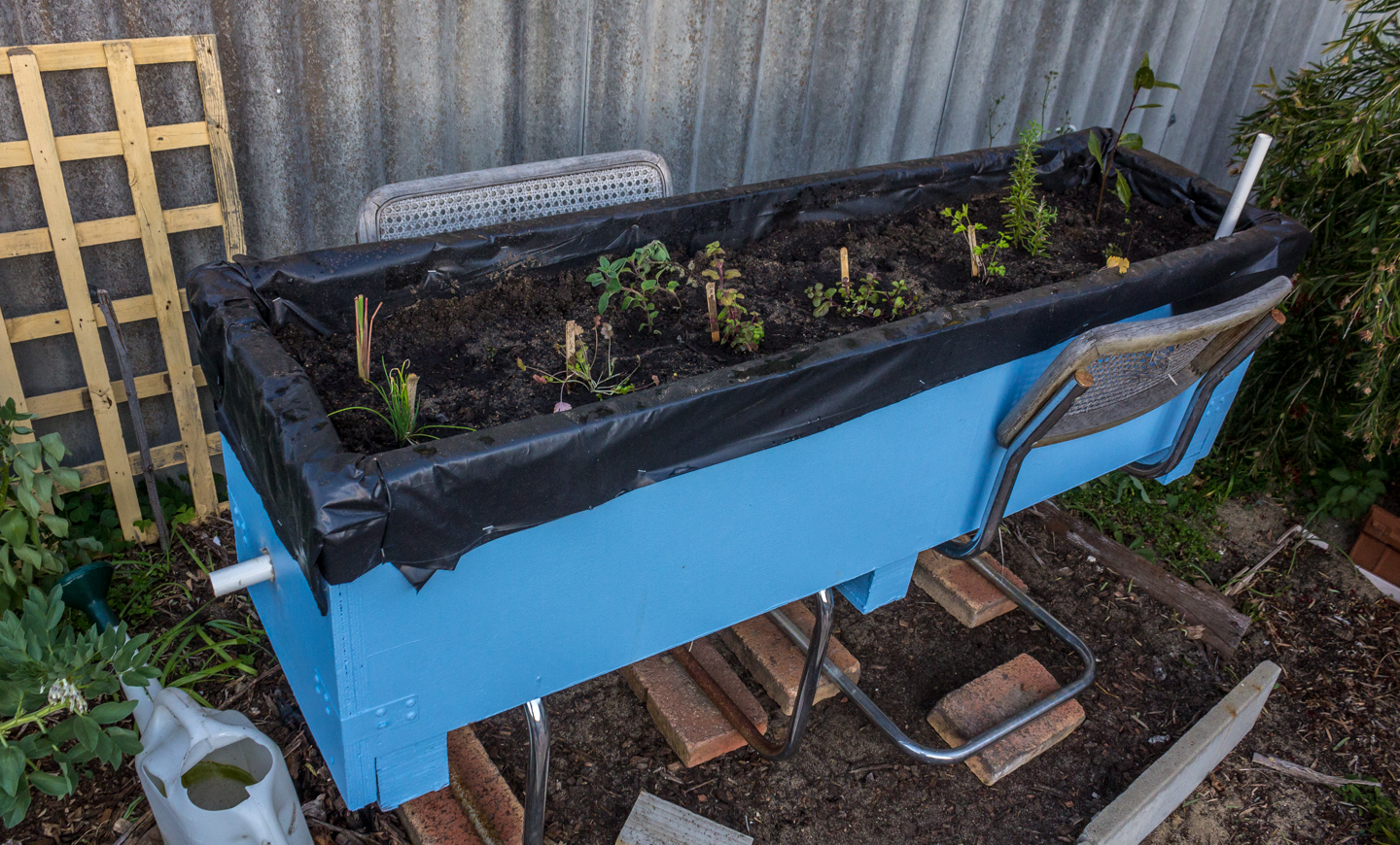 19/09/15 Day 28 [Day 2 of the project]: The Final Wicking Bed 3 Herb 14