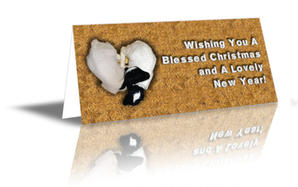 "Two lambs sleeping on each other in a heart shape design saying ""Wishing You A Blessed Christmas and A Lovely New Year!"""