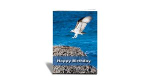 Happy Birthday Flying Osprey Card