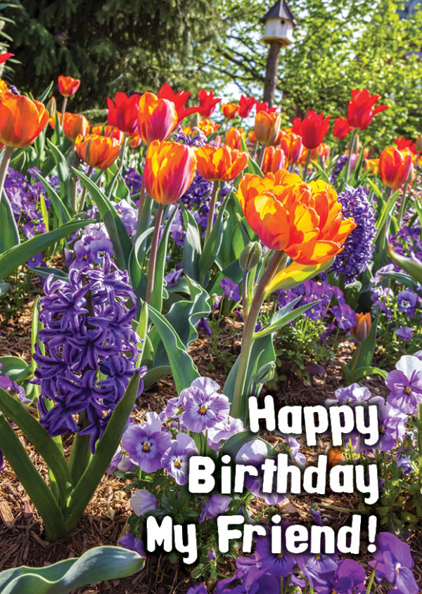 """Different flowers of different colours of blue, orange and red. With text in front saying """"Happy Birthday My Friend"""""""