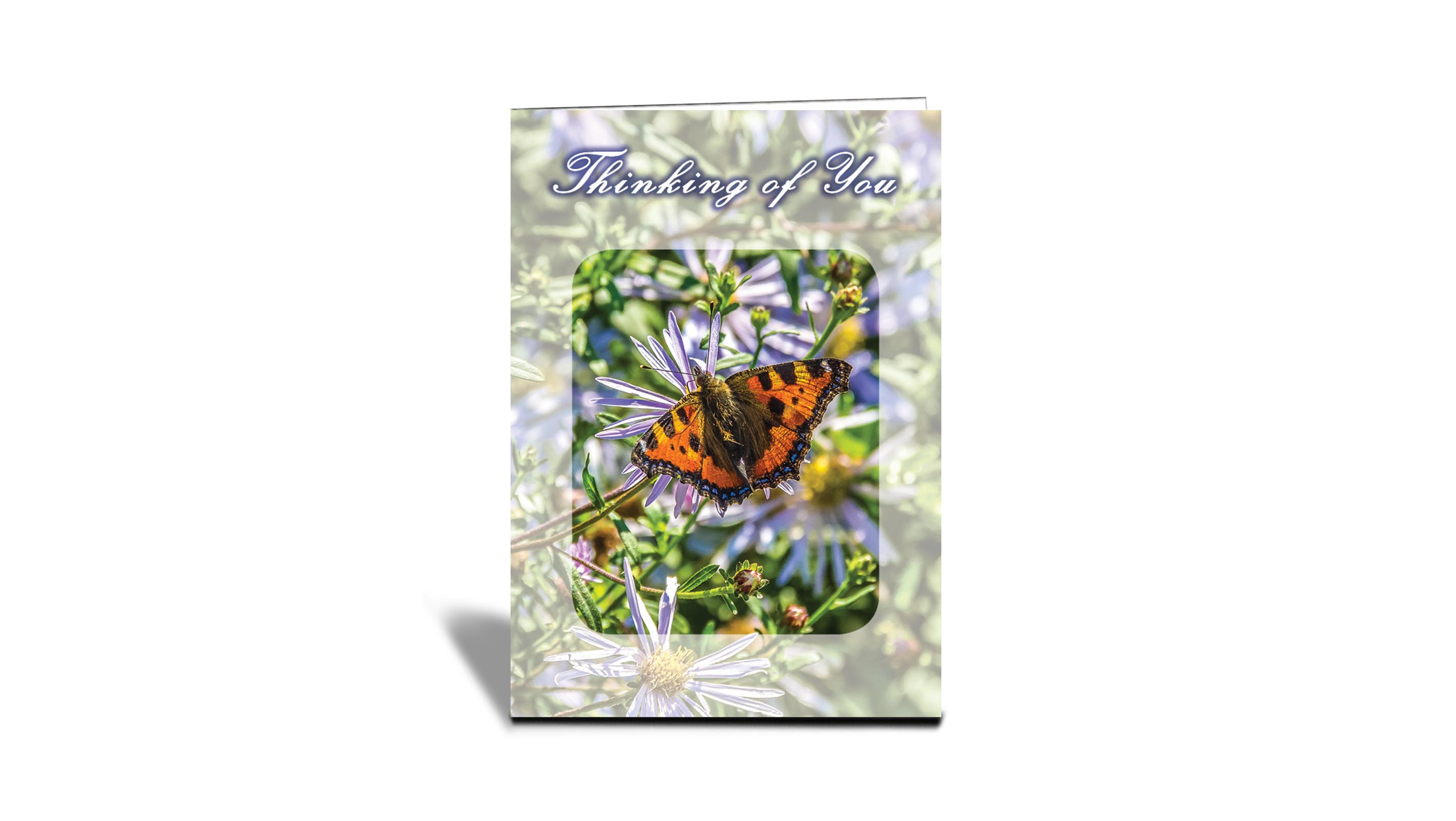 Butterfly Nature Inspirational Photo Greeting Cards With Text