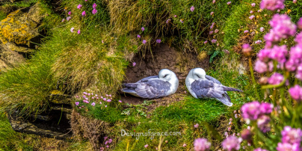 2 birds sleeping with their beak tucked in on the side of the cliff