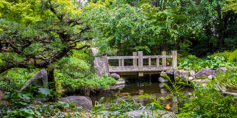 Beautiful greenery around the pond and bridge in the garden