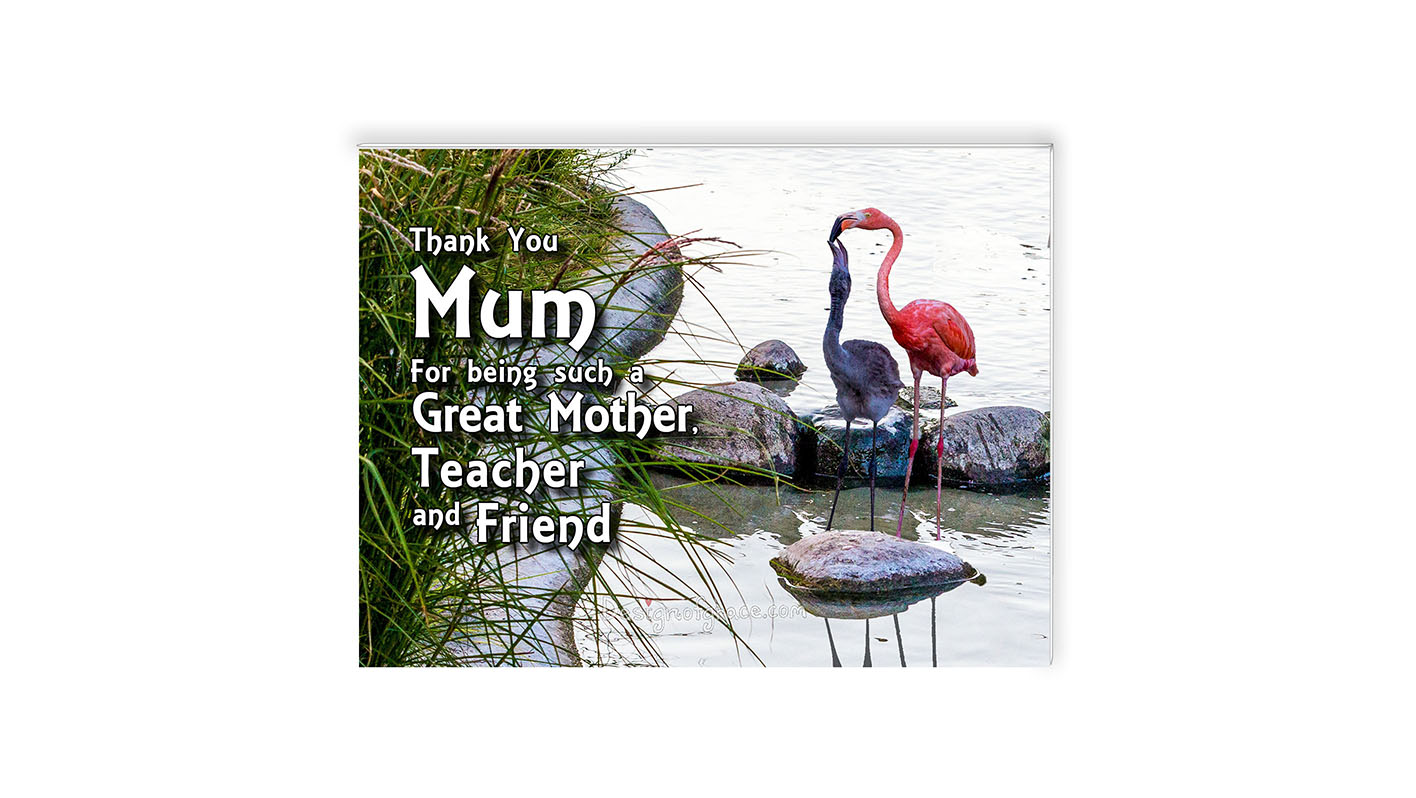 "A pink Flamingo mum feeding her baby in the water with green reeds on the left,   Zoologisk Museum, Copenhagen, Denmark Inspirational Mount with the words ""Thank You Mum  For being such a  Great Mother,  Teacher  and Friend"""