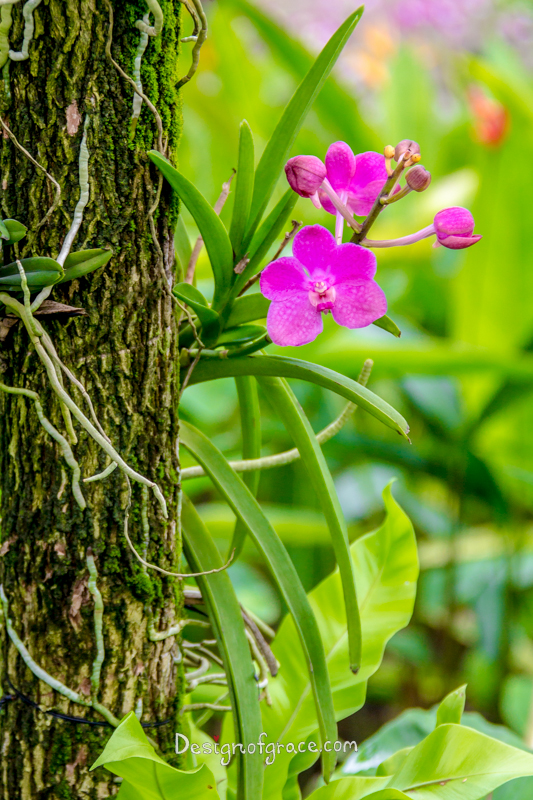Pink Orchid with a textured brown trunk o the left and green background on the right, Botanical Gardens, Singapore