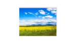 Canola fields, Stirling Ranges, Western Australia | Nature | Inspirational Mounted Photo | 8 x 6