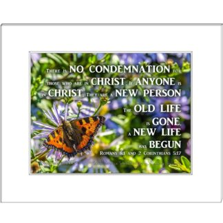 16 Beautiful orange Butterfly among flowers from Hamburg with words There is NO CONDEMNATION For those who are in Christ, If ANYONE is in CHRIST, They Are a NEW PERSON The OLD life is GONE, a NEW LIFE has BEGUN Romans 8:1 and 2 Corinthians 5:17