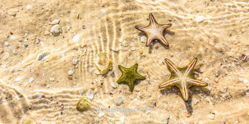 Nicholson Point Starfish with yellow sand background and water ripple patterns, Denham, Shark Bay Marine Park and World Heritage Site, Monkey Mia, Denham, Western Australia