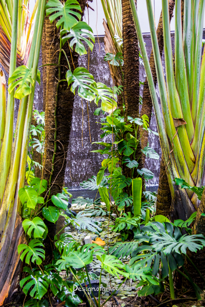 Green climbing plants climbing trees with a waterfall background, Changi Airport, Singapore