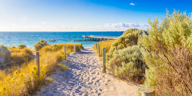 Coogee beach Jetty on a beautiful sunny day with blue skies and yellow sand with some green foliage, Coogee, Western Australia